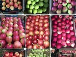 Pommes en gros Apples wholesale LLC Mitlife