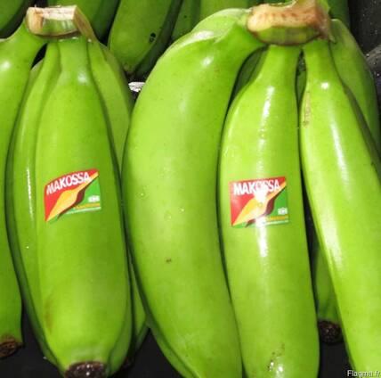 Bananes Covendich douce de table Grade A