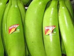 Bananes Covendich douce de table Grade A - photo 1