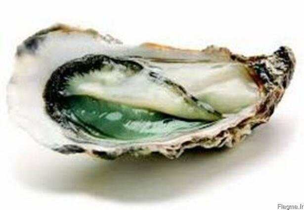 Благородная рыба и морепродукты, Франция