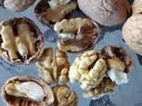 Орехи - walnuts inshell, kernel - фото 1