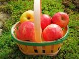Paniers en placage de fruits - photo 2