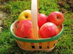 Paniers en placage de fruits