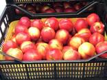 Sweet and juicy Peach, Nectarine and Cherry time. - фото 5